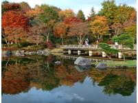 楓迷全球/日本楓紅正延燒  出遊趁現在