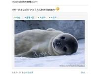王菲懷胎3月 微博羞認發福