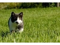 「盲眼貓」Jack熱愛冒險 還會教孤兒小貓求生術