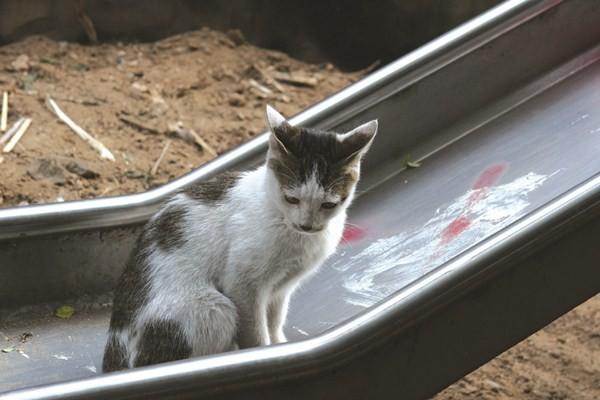 街猫玩溜经典!摄影师捕捉视频瞬间 ETtoday宠手机软件上传滑梯图片