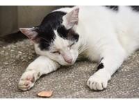 紐澤西州將立法「禁止貓去爪」 違反獸醫坐牢6個月