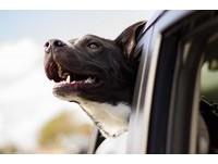 汪星人故鄉在哪裡? 研究發現狗狗可能起源自中亞