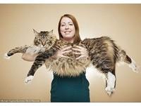 英國巨貓身長118公分 抱牠等同一次抱5個嬰兒