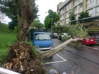 風很大!北市3層樓高樹倒 砸中路邊轎車