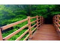 下雨天更美的祕境!到濟州思連伊林道尋找「祕密花園」