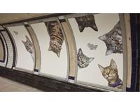 喵星人全面攻佔!超可愛貓咪「入侵」倫敦地鐵燈箱啦