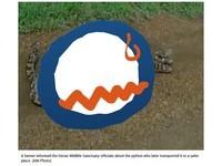 6米巨蟒吞下「亞洲最大羚羊」...「鼓脹數倍大」躺路中