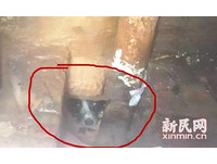 為了救卡下水道的小狗 消防3次出動鑽人孔、爬糞坑