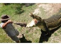 遭4.5公尺鱷魚狠咬拖下水 澳「騎鱷大師」重傷恐截肢