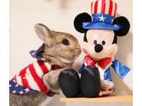 兔子界也有迪士尼控?童心指數100%的萌兔Chico