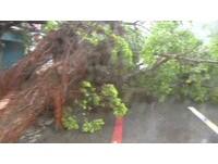 梅姬強襲花蓮 鐵皮街上片片飛移 路樹連根拔起躺路中