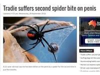 澳洲最衰男!上廁所被蜘蛛咬傷命根子 5個月來第2次