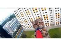 星國小貓驚險卡在12樓窗台邊 怕墜樓雙手緊握救命桿