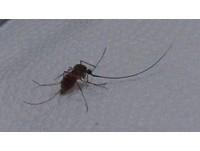 種睫毛被咬...她氣到抓蚊子改造 賞你根「進擊的吸管」