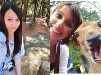 網熱議日本奈良鹿是「CCR」?見洋人開心 亞洲人賞白眼