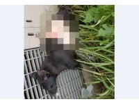 小黑狗橫死路邊 肚子「整圈皮」被切下:看刀法是專業的