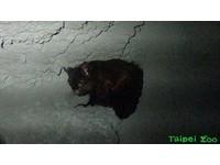 新成員「大赤鼯鼠」救傷後亮相 動物園與穿山甲當鄰居