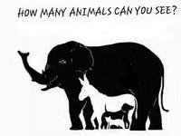 這張圖內有16種動物 你看得出來嗎?