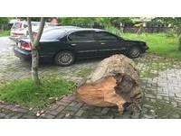 撿700公斤漂流木沒固定好 香杉「逃生」 滾下車遭警查獲
