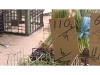 菜價暴漲!爛空心菜一把45元 菜蟲:低買高賣,爽賺!