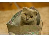 「胖歸胖,朕還是要塞」 貓咪狂愛「紙箱」的3大原因