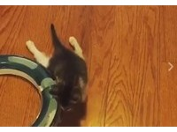小貓拖後腿高速爬 樂觀只因暖男賓士喵哥哥「始終陪身旁」