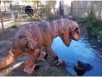 「恐龍」討親親+摸鼻調戲 只求明星鱷魚「為食動身」