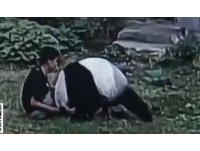 跳入熊貓園博妹子一笑 江西男吵醒「美靈」被撲倒撕咬