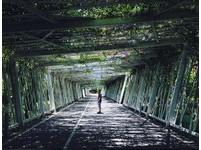 台北花博公園另類秘徑!花之隧道、太陽橋怎麼拍怎麼美