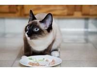 貓主子愛挑食? 別老供奉食物...「製造需求」才是關鍵