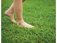 康健雜誌/「拇趾外翻」不是因為穿錯鞋!是因為…