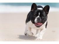 見到人就發瘋? 3招解決狗狗的「狂熱飛撲」...太熱情啦