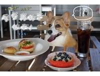 帶毛小孩去旅行!在地人推薦的墾丁10大寵物友善餐廳