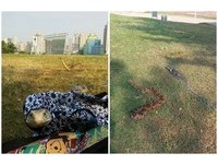 公園遛紅尾蚺、南美蜥被1999驅離 主人:為何毛小孩可以