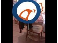 女孩房裡的「必備神器」 這張椅子讓網友驚呆:超堅強!