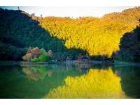 想去要快!東台灣5處落羽松美景 隨手拍都像歐洲風景畫
