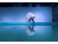 不要再哭了!用行動支持「悲傷北極熊」回歸大自然