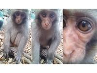 裡面是我嗎?壽山獼猴寶寶看到自拍鏡 好奇向前把臉塞滿
