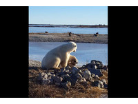北極熊溫柔撫摸汪星人的頭 甜蜜互動「好有愛」!