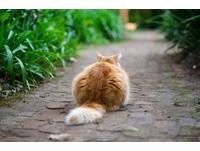 尾巴往上翹代表開心? 從「6種尾巴變化」看透貓咪心