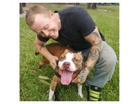 對比特犬「貝拉」一見鍾情 他開車3200公里領養回家