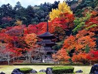 3000楓紅環抱古剎 京都賞楓秘境「金剛院」美得像幅畫