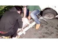 24歲JAGUAR男酒駕撞死導盲犬 「狗狗出聲要人幫忙救主人」