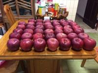 收賄「大紅榮蘋果」才吃1顆就被抓 47顆拍賣3分鐘完售