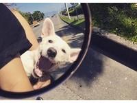 後癱米克斯Polly坐機車兜風 後照鏡映出幸福燦笑