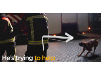 消防員準備拉倒樹 傻汪看到忍不住「裂嘴咬繩」搶幫忙