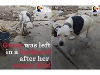 主人病死...狗狗被鎖後院瘦到皮包骨 見人來開心搖尾巴