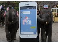日本大象「夢花」親鼻畫LINE貼圖 為出嫁要籌576萬元