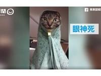有種冷叫媽媽覺得你冷! 萌貓包成「無臉男」無奈眼神死