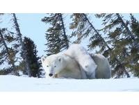 31年走遍128國!台東眼醫師用鏡頭「捕捉」北極熊母子
